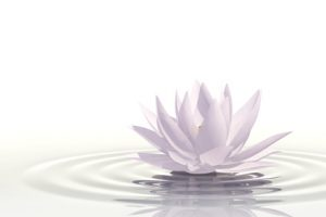 Very high resolution 3d rendering of a floating waterlily over white